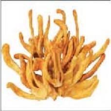 Đông trùng hạ thảo AndeSK  sấy khô 20 gram - Chay